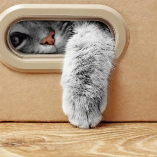 Pet Moving Tips Avon